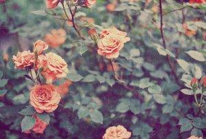 tumblr_mm1q6awYH71rzadffo4_500